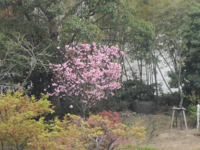 Kansai solo_2433.JPG