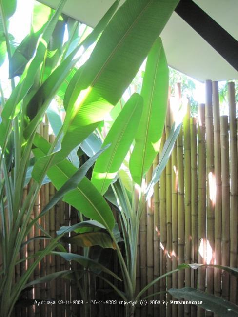 Baan Thai House18.JPG