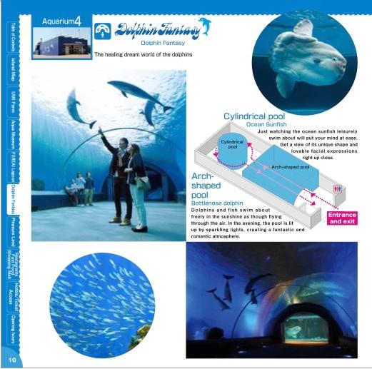 4) Dolphin Fantasy.jpg
